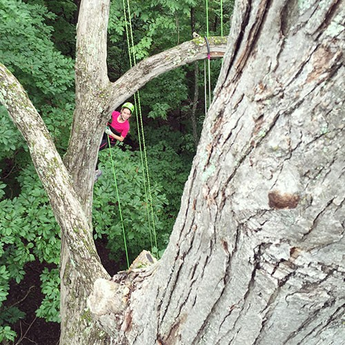 About Tree Climbing 1
